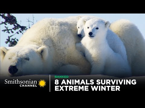 8 Animals Surviving Extreme Winter 🥶 Smithsonian Channel