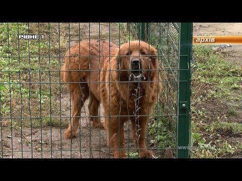 Коли виселять собак із колишнього Радіозаводу? [ВІДЕО]