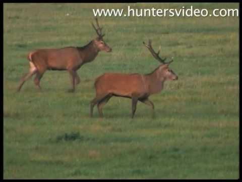 The Hunter's Poland - Hunters Video