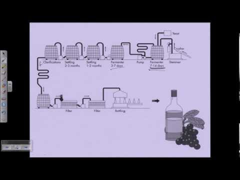 Wine production overview