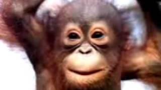 Download Lagu Monkey Singing Happy Birthday Song Funny Mp3