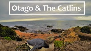 The Catlins New Zealand  City pictures : Otago Peninsula & The Catlins | New Zealand