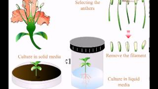 Various types of tissue culture
