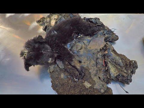 Puppy schreeuwt om hulp opgesloten in teer