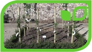 Paradise Garden with the Small Columnar Apple Trees Malini
