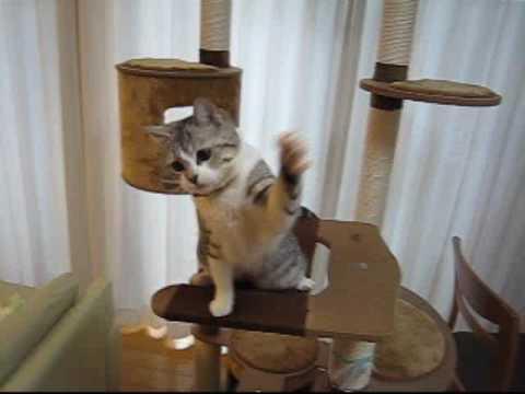 「[ネコ]左右に激しく揺れ動くオモチャを必死に追いかける猫の視線が超多忙。」のイメージ