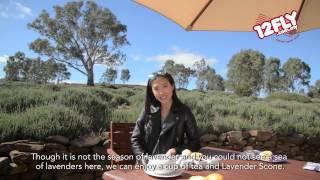Yuulong Australia  City pictures : 12fly TV - Rain at Lyndoch Lavender Farm, South Australia