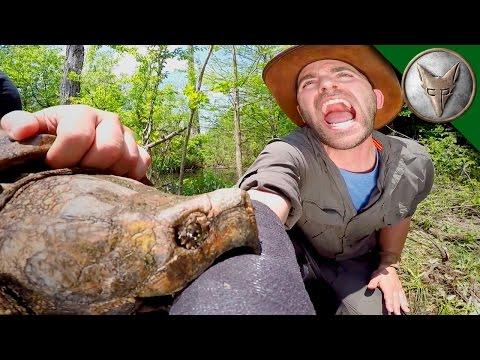 這名男子竟自願將手臂送往大鱷龜嘴中