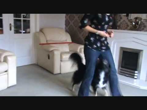Clever dog tricks with Lucy and Skye