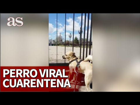 Murphy, el perro viral de la cuarentena del CORONAVIRUS | Diario AS