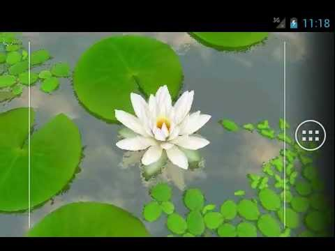 Video of 3D Lotus Live Wallpaper