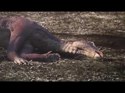 12 Животных, Которые Вымерли — К Счастью Для Человека (видео)