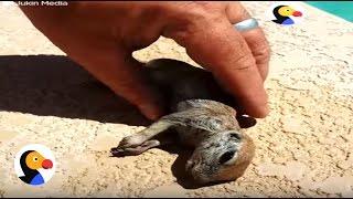 Wyłowił go i za pomocą masażu klatki przywrócił do życia! Uratowany tonący piesek preriowy!