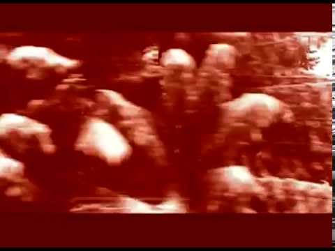 'Sous les rouges croisées' : Poème de Nicole Coppey