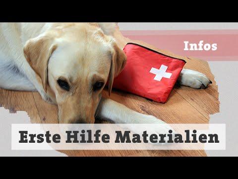 Erste Hilfe - Materialien für den Notfall - Hund Hund ...