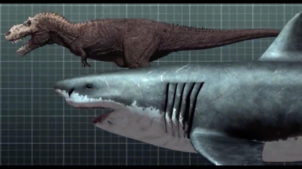 Мегалодон жив! Доисторическую акулу обнаружили в Марианской впадине