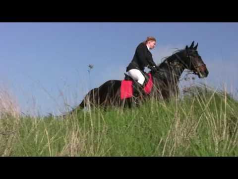 Utah Guided Horseback Riding - Salt Lake City Adventure Guides