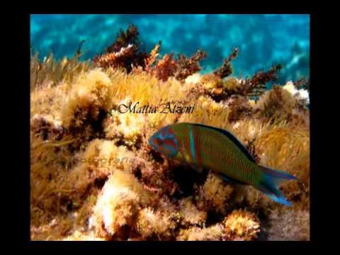 Sardegna: Ti penso sempre terra mia_wmv