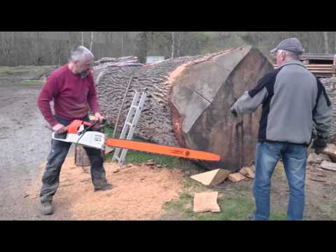 Stihl ms 880 150cm vs big oak log