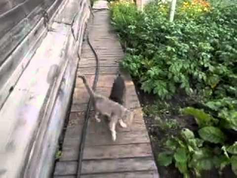 主人下令回家貓咪卻慵懶不動,旁邊心急的狗狗想出的絕招讓人肚皮都要笑破了啊!