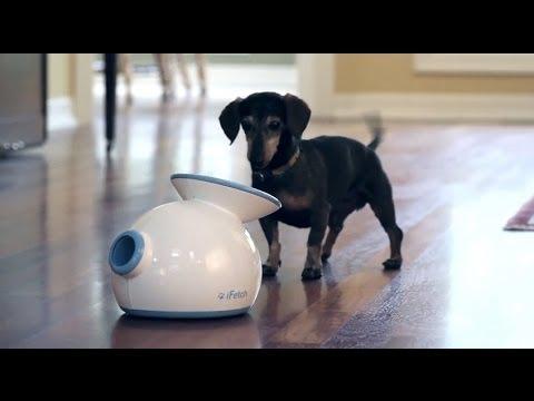狗狗專屬的自動發球機 讓牠玩千遍也不膩