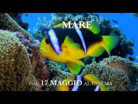 Preview Trailer Le meraviglie del mare, trailer ufficiale italiano
