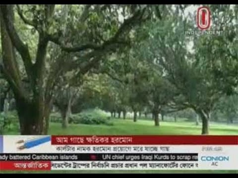 Trees die due to hormone treatment (19-09-2017)