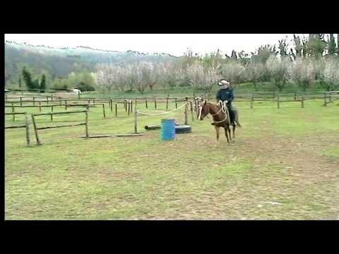Intervento sul profilo emozionale di un cavallo molto emotivo