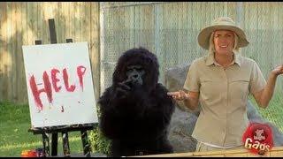 Painting Gorilla Prank