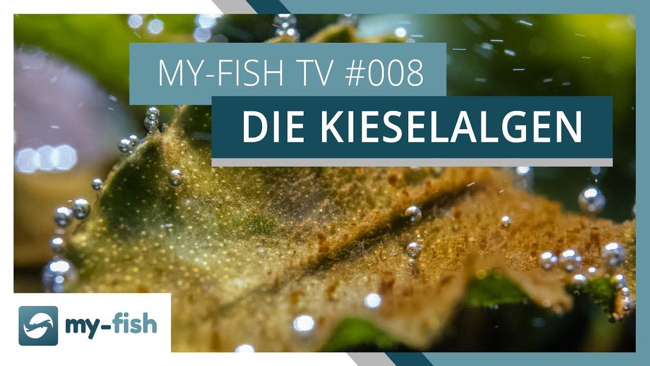 my-fish TV - Deine Nr. 1 Anlaufstelle für alle Themen rund um die Aquaristik 56