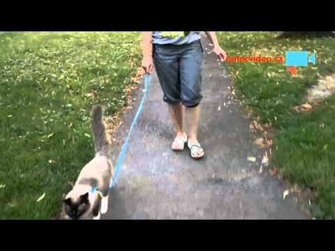 Miky na procházce