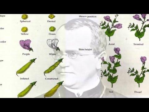 Von Punnett persönliche Genomik: ein Jahrhundert der Genetik in Cambridge
