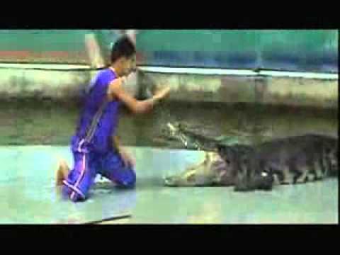 cocodrilo ataca a una persona