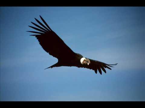 musica andina peru ( el condor pasa ).wmv