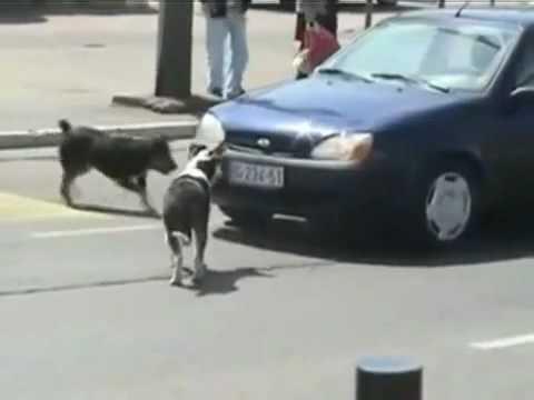 Куче срещу автомобил