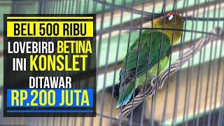 Video BELI 500RIBU , BETINA INI KONSLET DITAWAR 200JT MP3, 3GP, MP4, WEBM, AVI, FLV September 2018