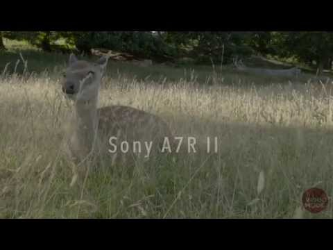Sony Alpha A7R II Sample 4K Video Footage