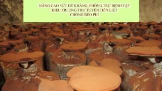 Hiện nay tại Trại Nấm Tuyết - Đông La - Hoài Đức - Hà Nội đang có bán Nấm Linh chi tươi. Quý khách có thể vào trực tiếp tại cơ sở thăm quan và uống thử Nấm L...