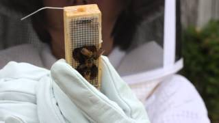 Kelley Beekeeping: How To Install A 3 Lb Package Of Bees