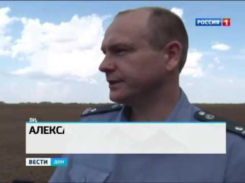 Горчак ползучий захватил в Ростовской области более 32 тысяч гектаров