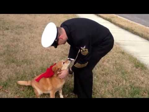 Dying Dog Hangs On To See Owner Return From Deployment {VIDEO]
