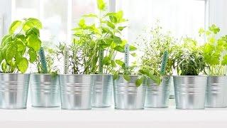10 Fresh Herb Hacks! by The Domestic Geek