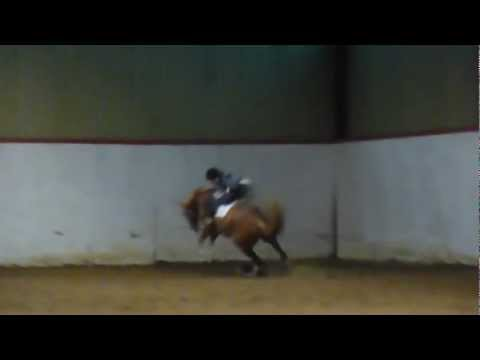 I like to FALL / FAIL with a new horse..