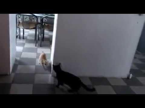 Gattini giocano a nascondino
