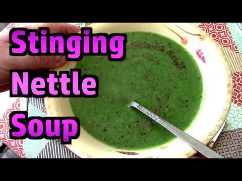 Stinging Nettle Soup - Delicious! - Foraging Tips And Recipe