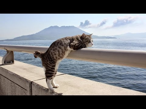 You'll LAUGH SO HARD that you'll need some TIME TO RECOVER - Ultra FUNNY ANIMAL compilation