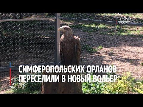 Симферопольских орланов переселили в новый вольер