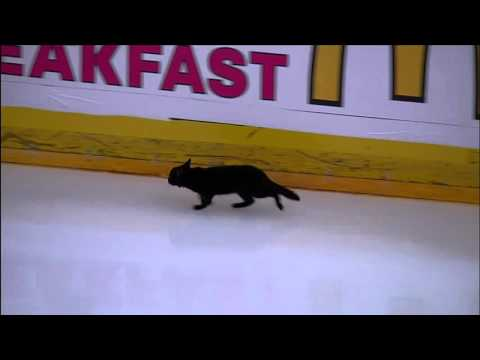 Black cat on the ice during Stanley Cup playoff warmups