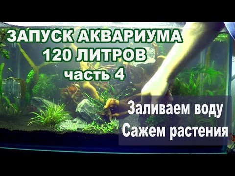 запуск аквариума с растениями видео ряд: