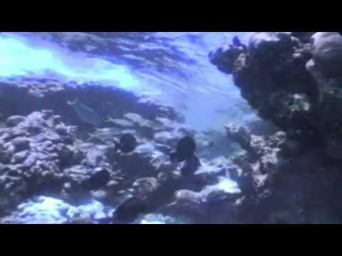 Ricardo Montaner - Besame   HD